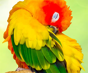 Avian DNA testing