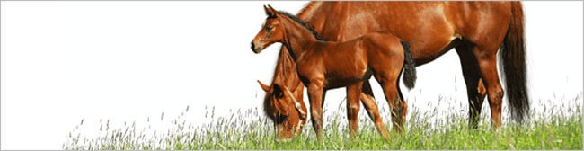 Equine Parentage DNA