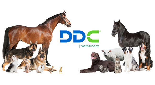 Why Choose DDC Veterinary