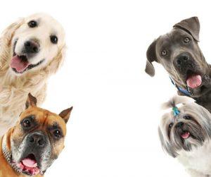 Dog Parentage Test