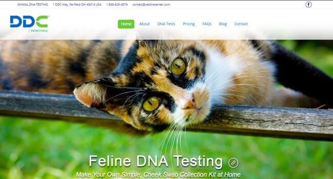 homepage DDC-Feline