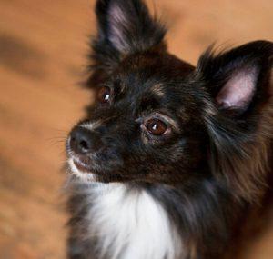 Wisdom Panel pricing pet