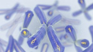 What Can We Learn From Our Telomeres