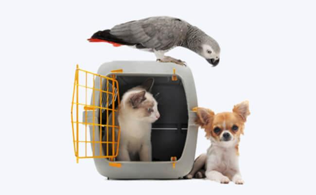 Who-zTheDaddy Animal Testing